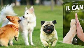 Adottare un cane è dare una mutamento migliorativo alla nostra vita